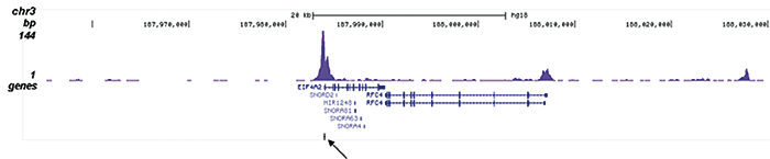 H4K5,8,12,16ac Antibody for ChIP-seq assay