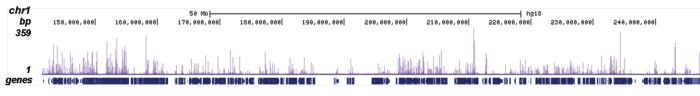 H4K5ac Antibody ChIP-seq Grade