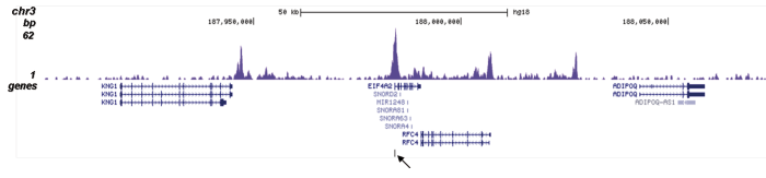 H4K5ac Antibody for ChIP-seq assay