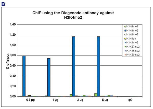H3K4me2 Antibody for ChIP