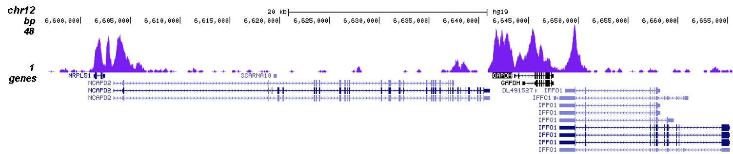 H3K4me2 Antibody validated in ChIP-seq