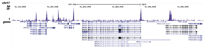 SAP30 Antibody for ChIP-seq assay