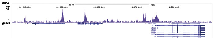 SAP30 Antibody validated in ChIP-seq