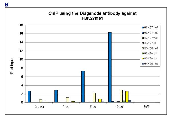 H3K27me1 Antibody ChIP Grade