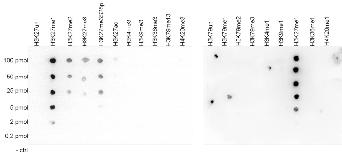 H3K27me1 Antibody validated in Dot Blot