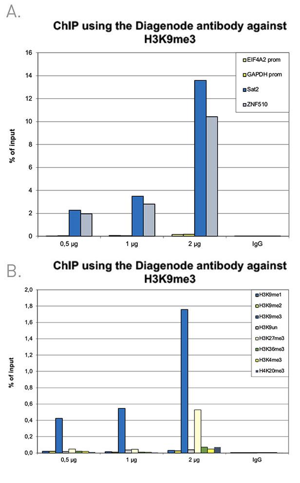 H3K9me3 Antibody ChIP Grade