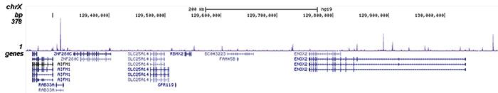 LSD1 Antibody for ChIP-seq