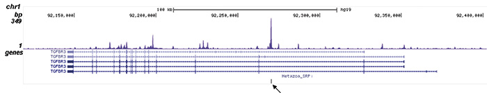 LSD1 Antibody validated in ChIP-seq