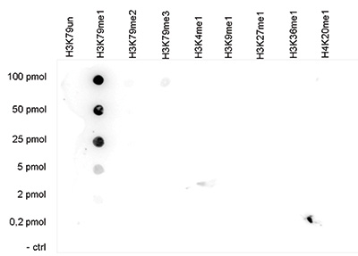 H3K79me1 Antibody Dot Blot validation
