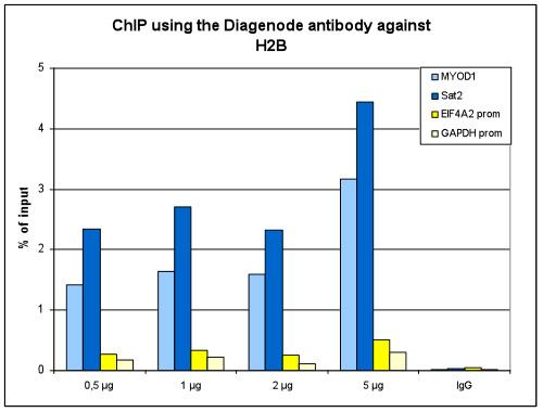 H2Bpan Antibody ChIP Grade