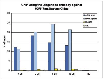 H3R17me2(asym)K18ac Antibody ChIP Grade