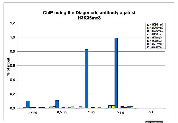 H3K36me3 Antibody SNAP-ChIP validation