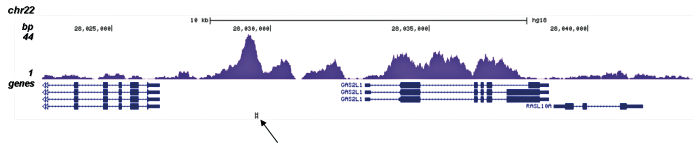 H3K4me1 Antibody for ChIP-seq