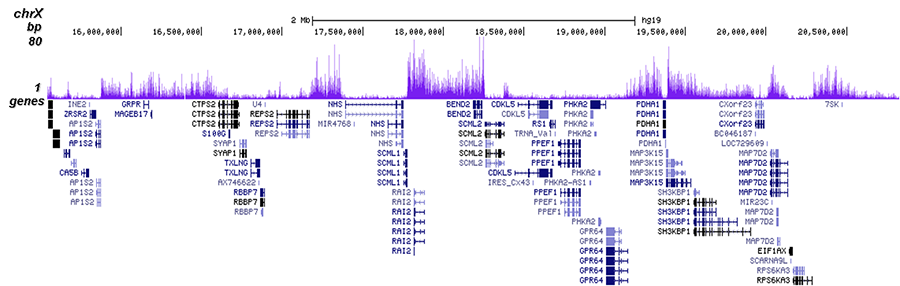 H3K27me3 Antibody validated in ChIP-seq