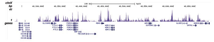 H2A.Z Antibody for ChIP-seq assay