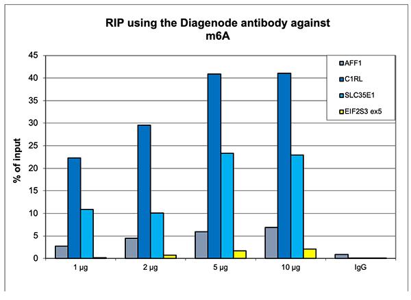 RNA immunoprecipitation