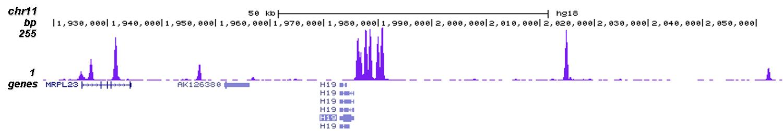 CTCF Antibody for ChIP-seq assay