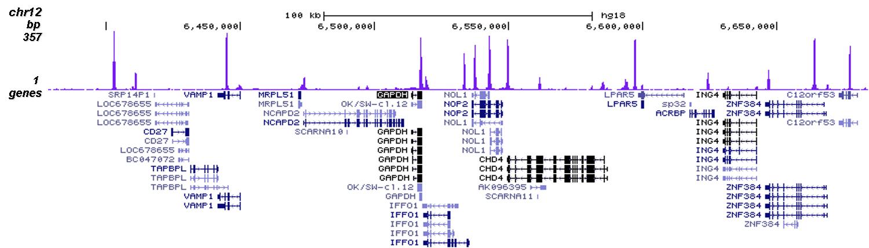 CTCF Antibody validated in ChIP-seq