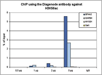 H3K56ac Antibody ChIP Grade