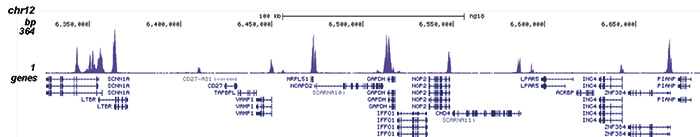 H3K56ac Antibody for ChIP-seq assay