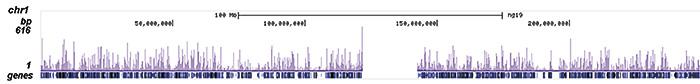 FOXA1 Antibody ChIP-seq Grade
