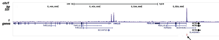 FOXA1 Antibody for ChIP-seq assay