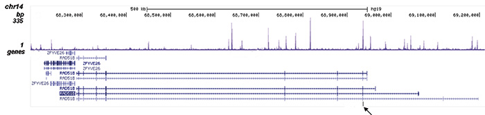 FOXA1 Antibody validated in ChIP-seq