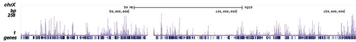 NF-E2 Antibody ChIP-seq Grade