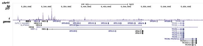 NF-E2 Antibody for ChIP-seq assay