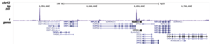 NF-E2 Antibody validated in ChIP-seq