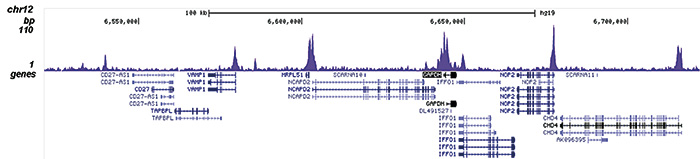 ChIP-seq results figure D