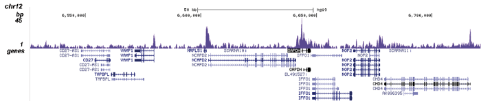 SMAD1 Antibody for ChIP-seq assay