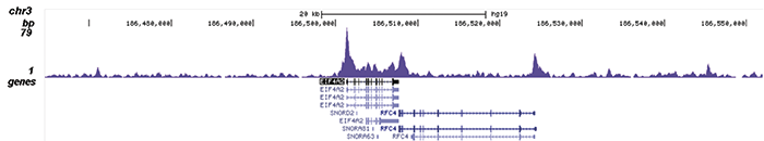 SMAD1 Antibody validated in ChIP-seq