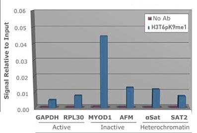 H3T6pK9me1 Antibody ChIP Grade