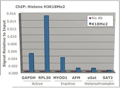 H3K18me2 Antibody ChIP Grade