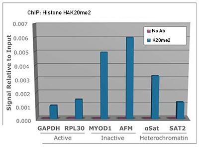 H4K20me2 Antibody ChIP Grade