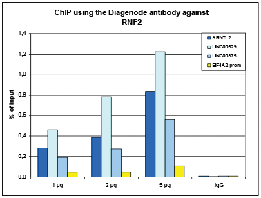 RNF2 Antibody ChIP Grade