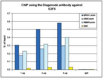 E2F6 Antibody ChIP Grade