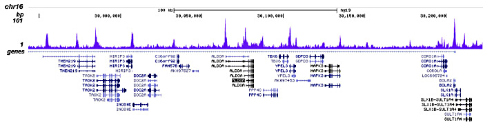 JARID1C Antibody for ChIP-seq assay