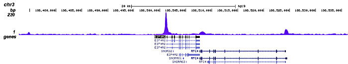 JARID1C Antibody validated in ChIP-seq