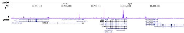NCOR1 Antibody for ChIP-seq assay