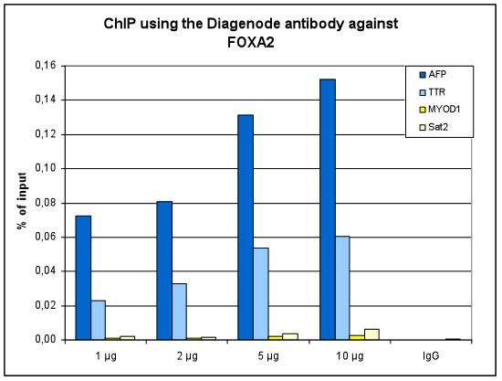 FOXA2 Antibody ChIP Grade