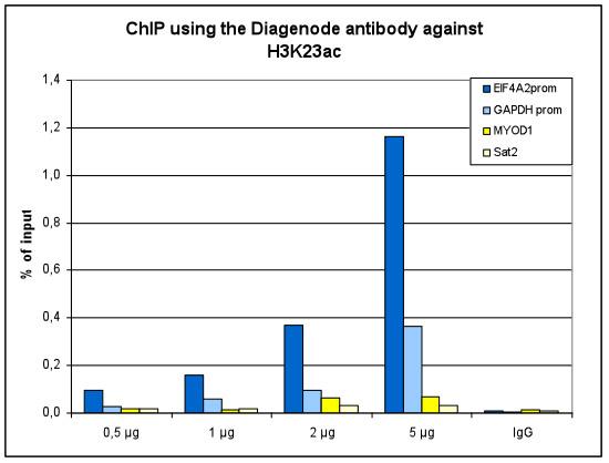 H3K23ac Antibody ChIP Grade