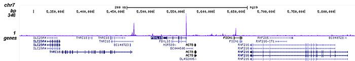YY1 Antibody for ChIP-seq assay