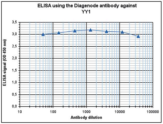 YY1 Antibody ELISA validation