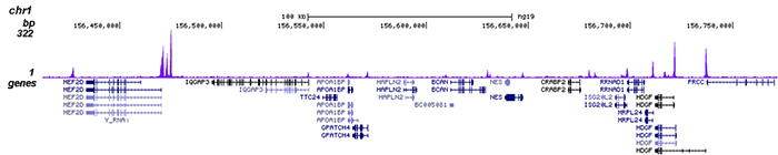 HDAC6 Antibody for ChIP-seq