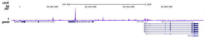 HDAC6 Antibody for ChIP-seq assay