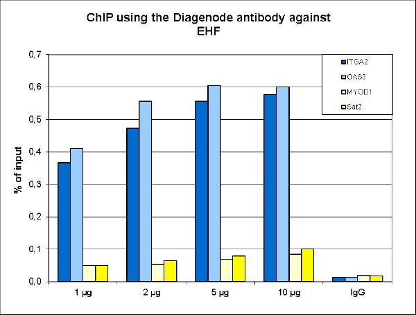 EHF Antibody ChIP Grade