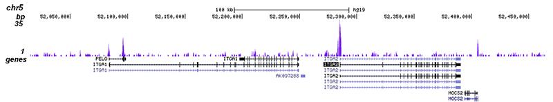 EHF Antibody for ChIP-seq assay