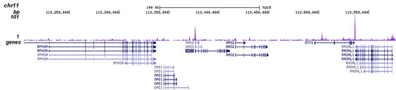 EHF Antibody validated in ChIP-seq